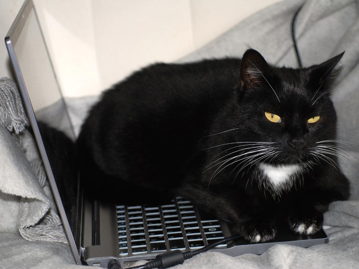 Chat noir dormant sur un ordinateur