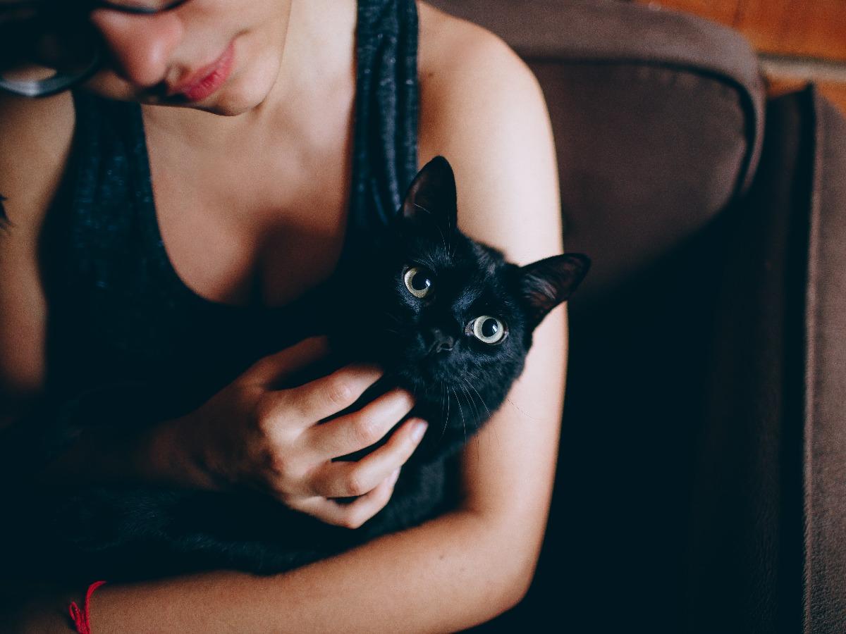 Chat noir avec son petsitter