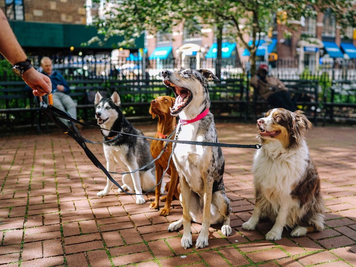 Petsitter avec quatre chiens