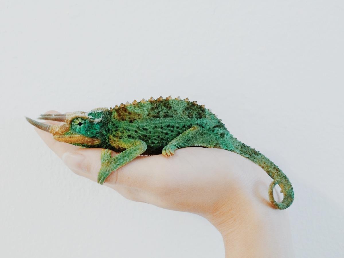 Reptile dans la main de son petsitter