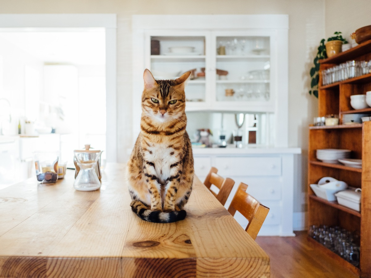 Chat assis sur une table