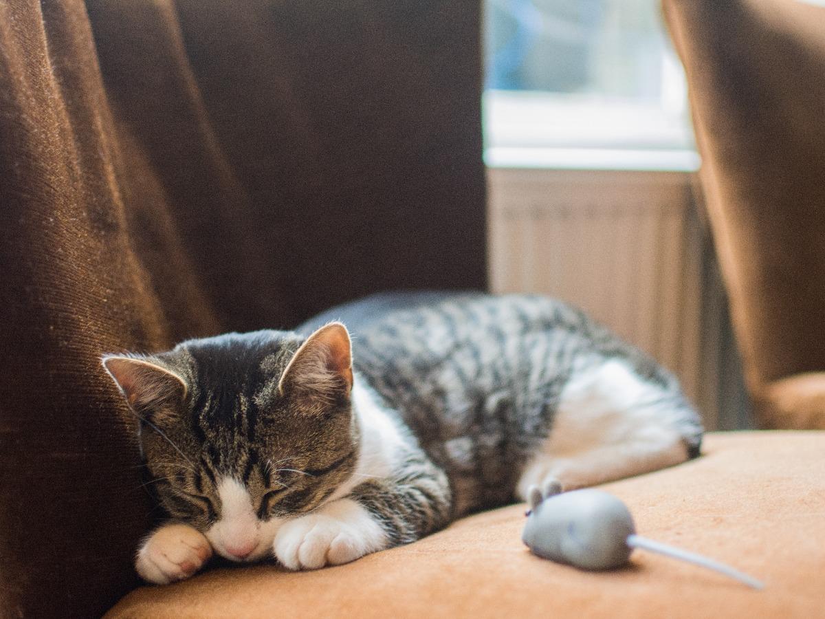 Chat qui dort prêt d'une fausse souris