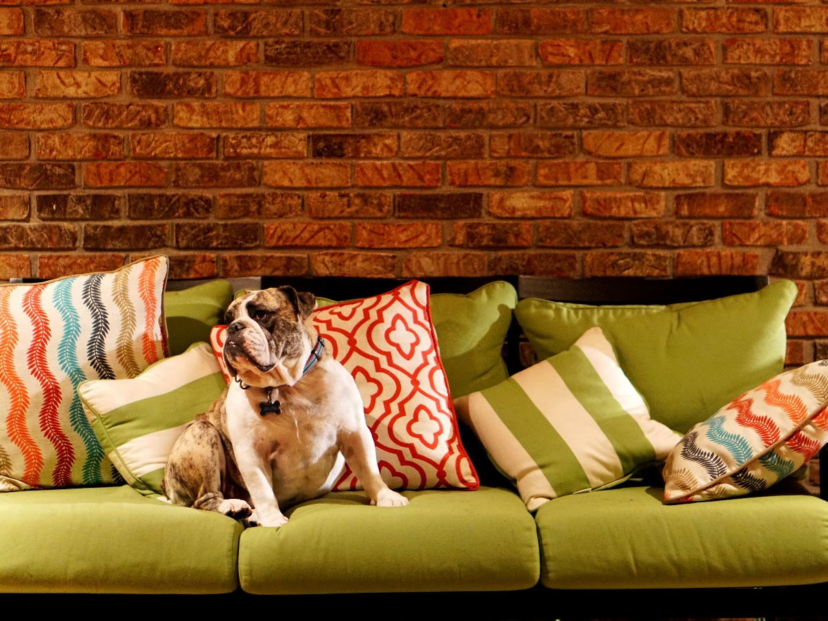 Chien sur un canapé coloré