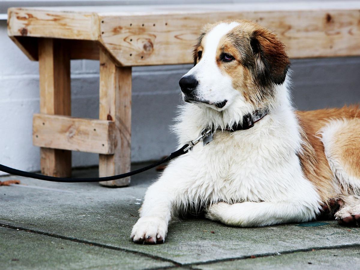 Comment faire garder son chien à Paris ?