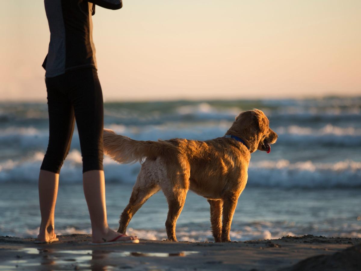 Chien et son petsitter au bord d'une plage