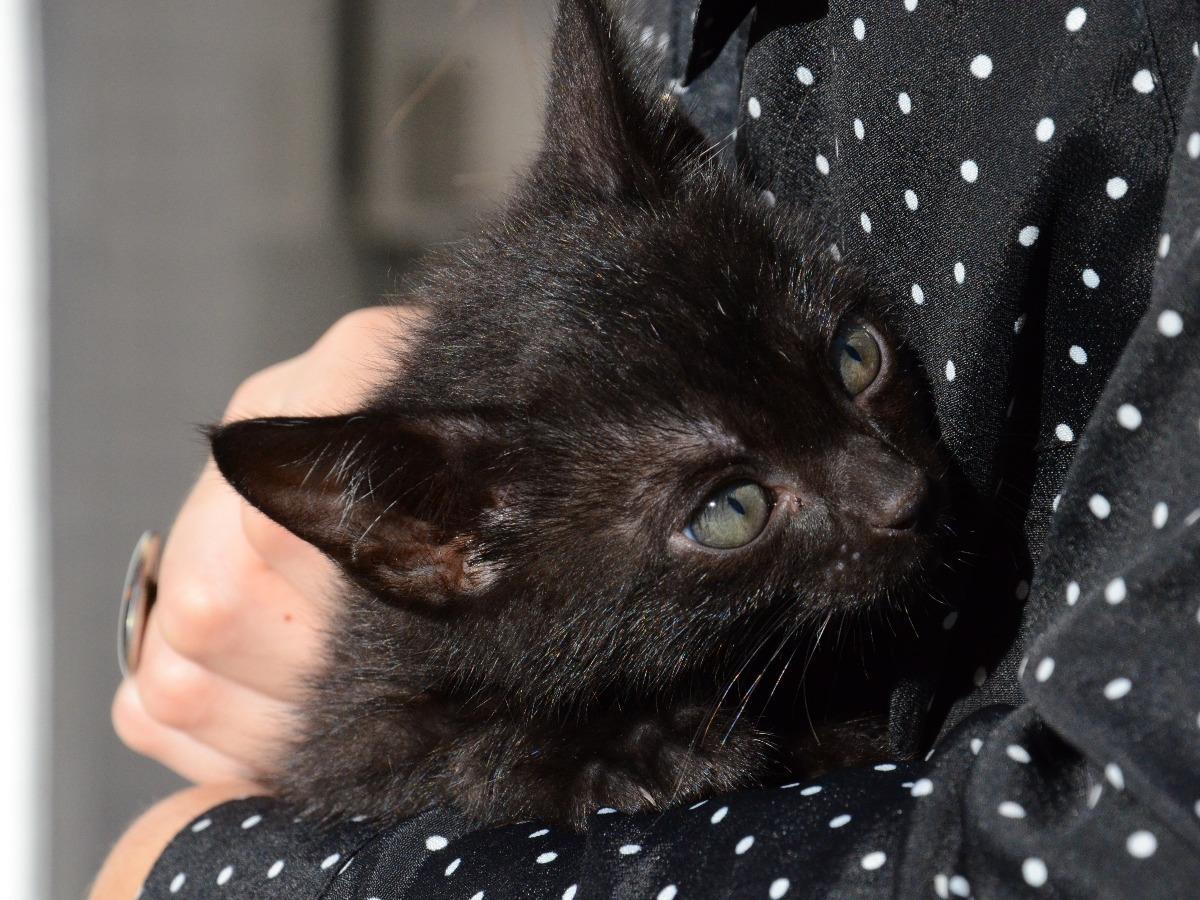 Chat noir dans les bras d'un petsitter
