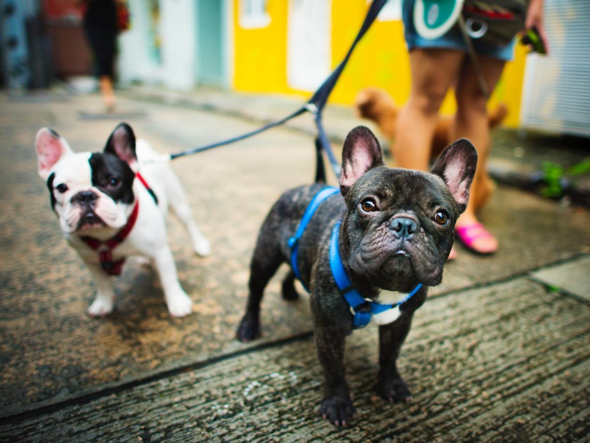 Deux chiens se promenant avec leurs petsitter