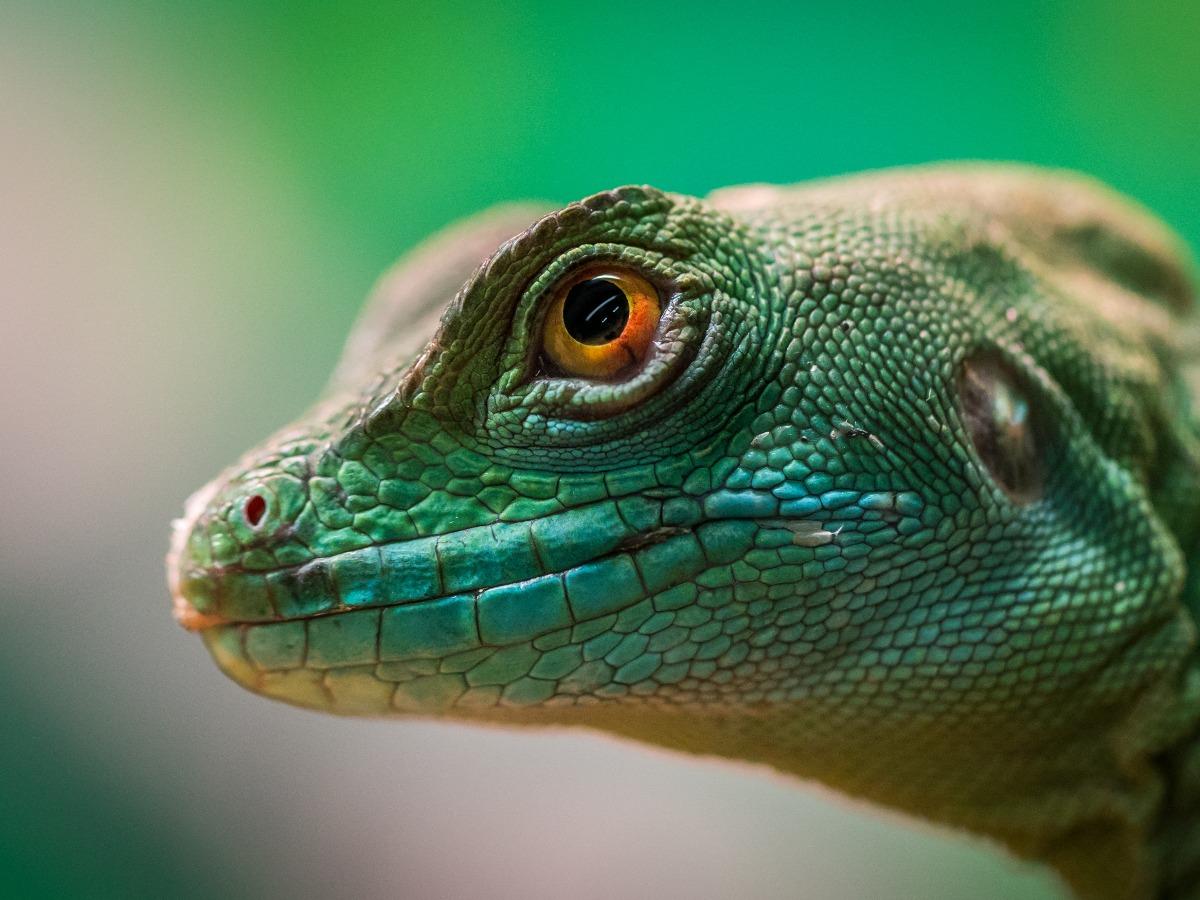 Beau reptile vert