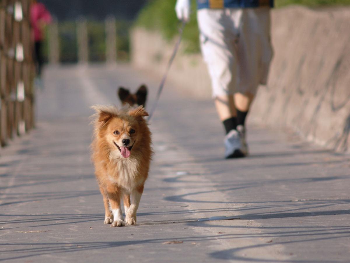 Un chien qui se promène