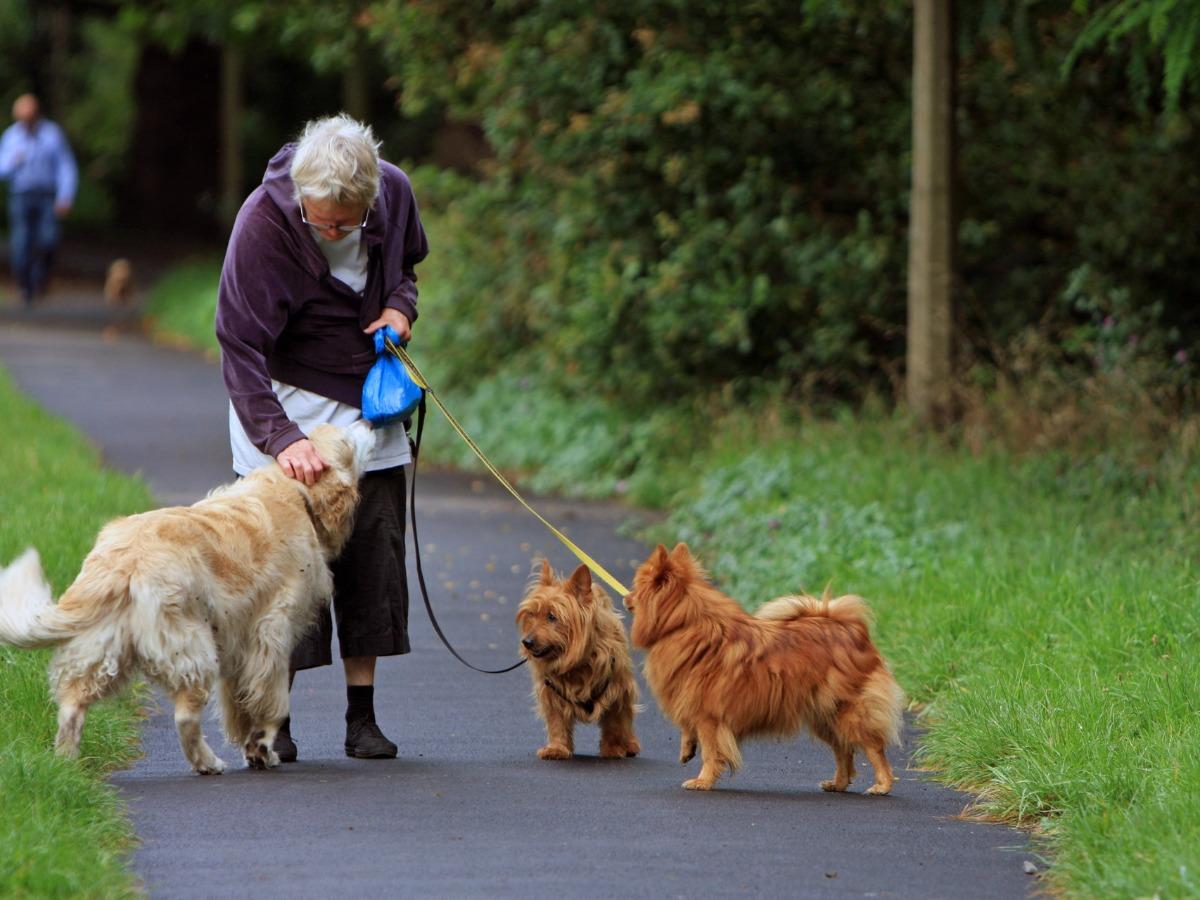 Personne âgée promenant deux chiens