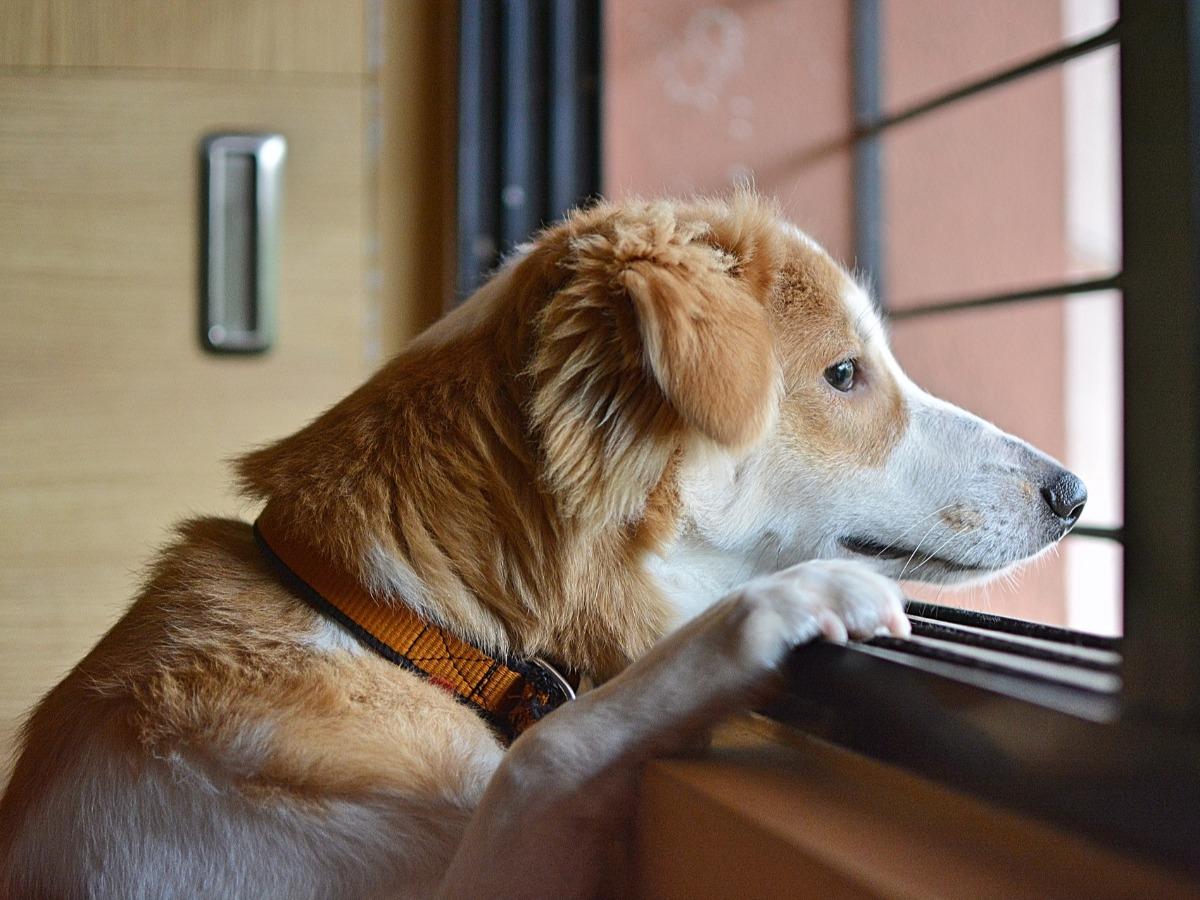 Chien qui regarde par une fenêtre