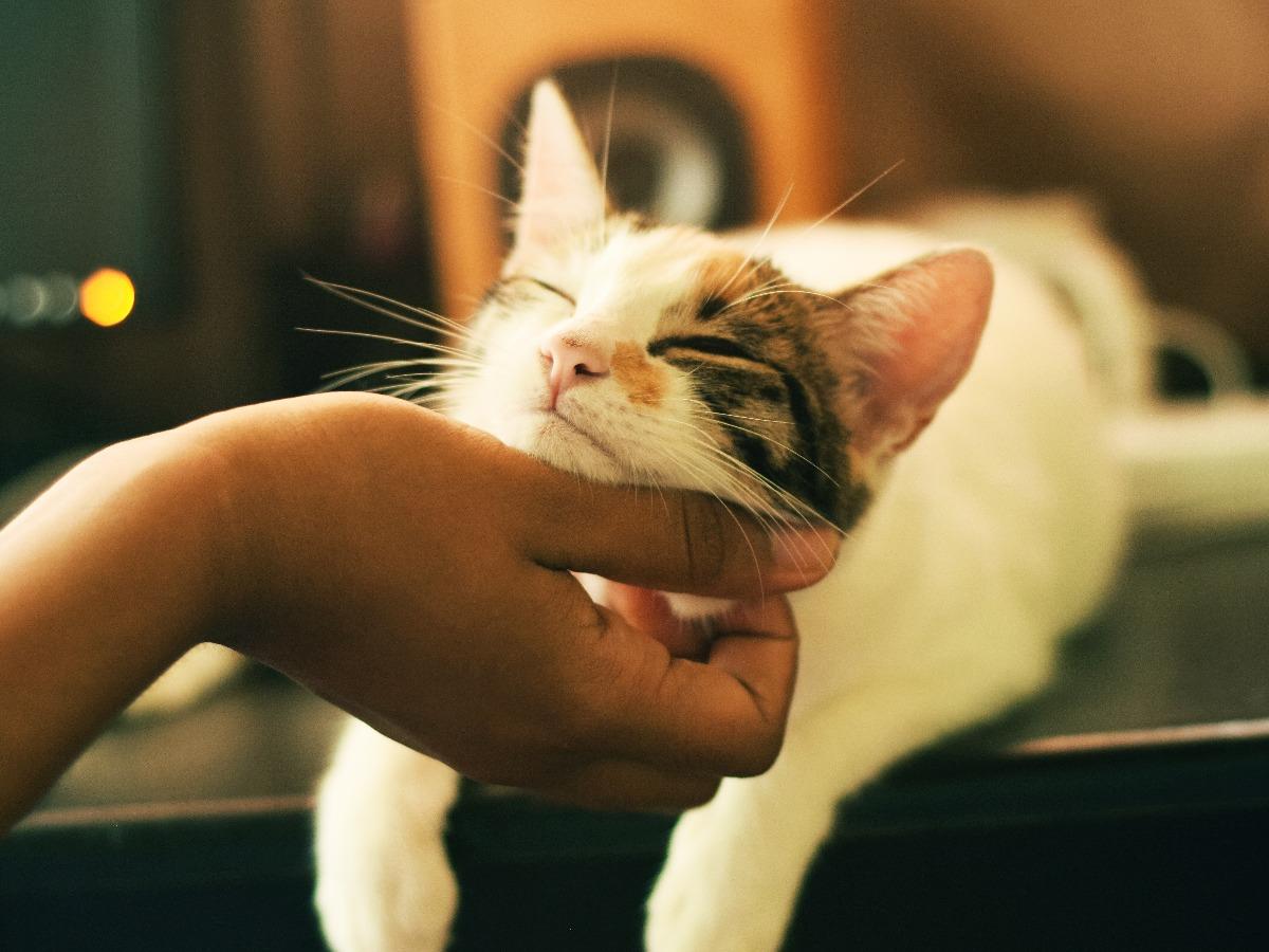 Chat se faisant gratter la gorge