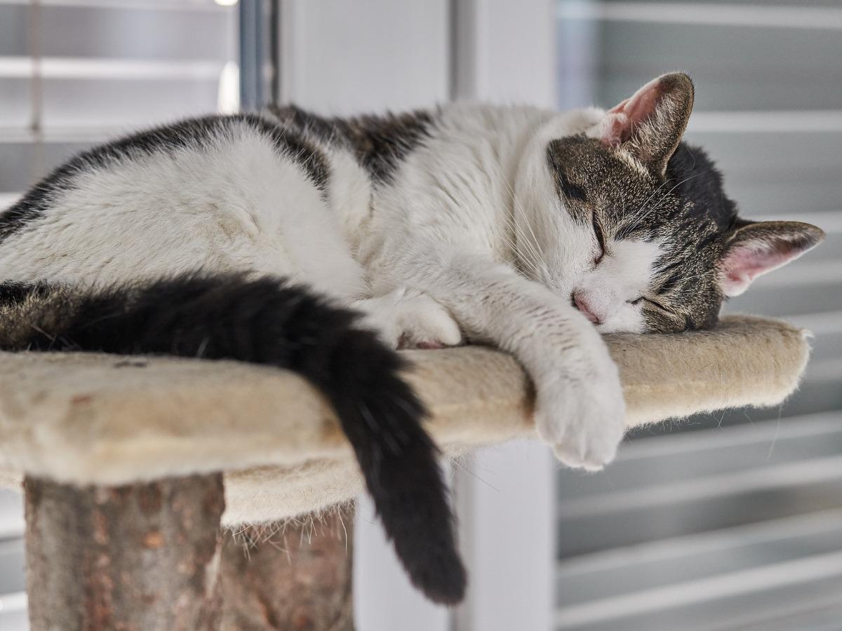 Chat qui dort sur un arbre à chat