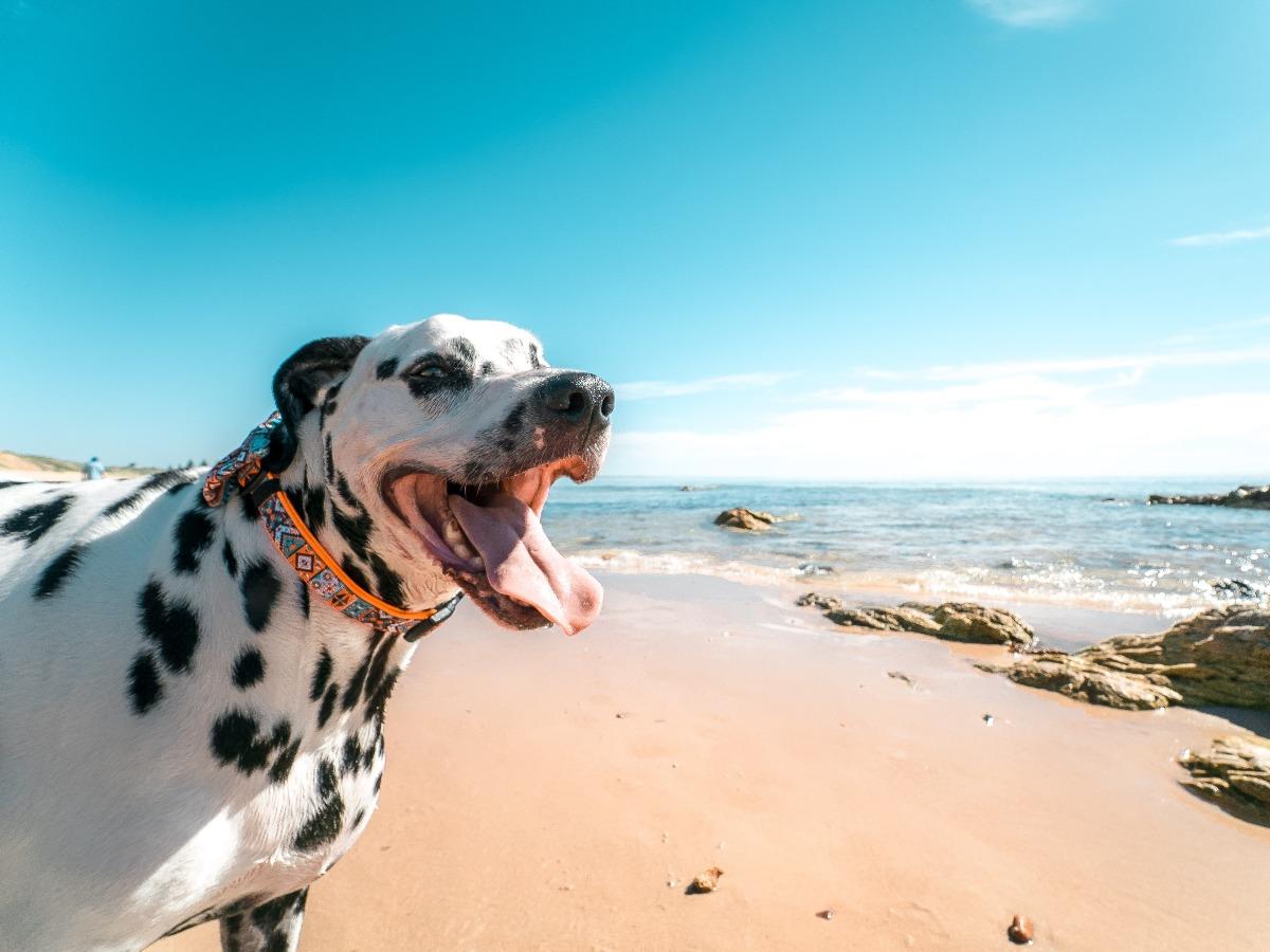 Chien heureux au bord de la mer