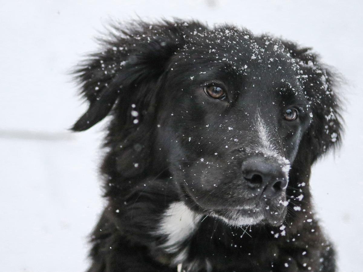 Chien noir dans la neige