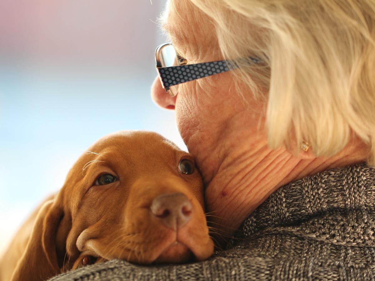 Petit chien mignon faisant un câlin à une personne âgée