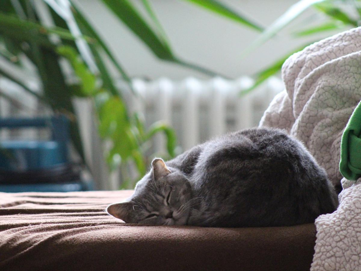 Chat qui dort tranquillement