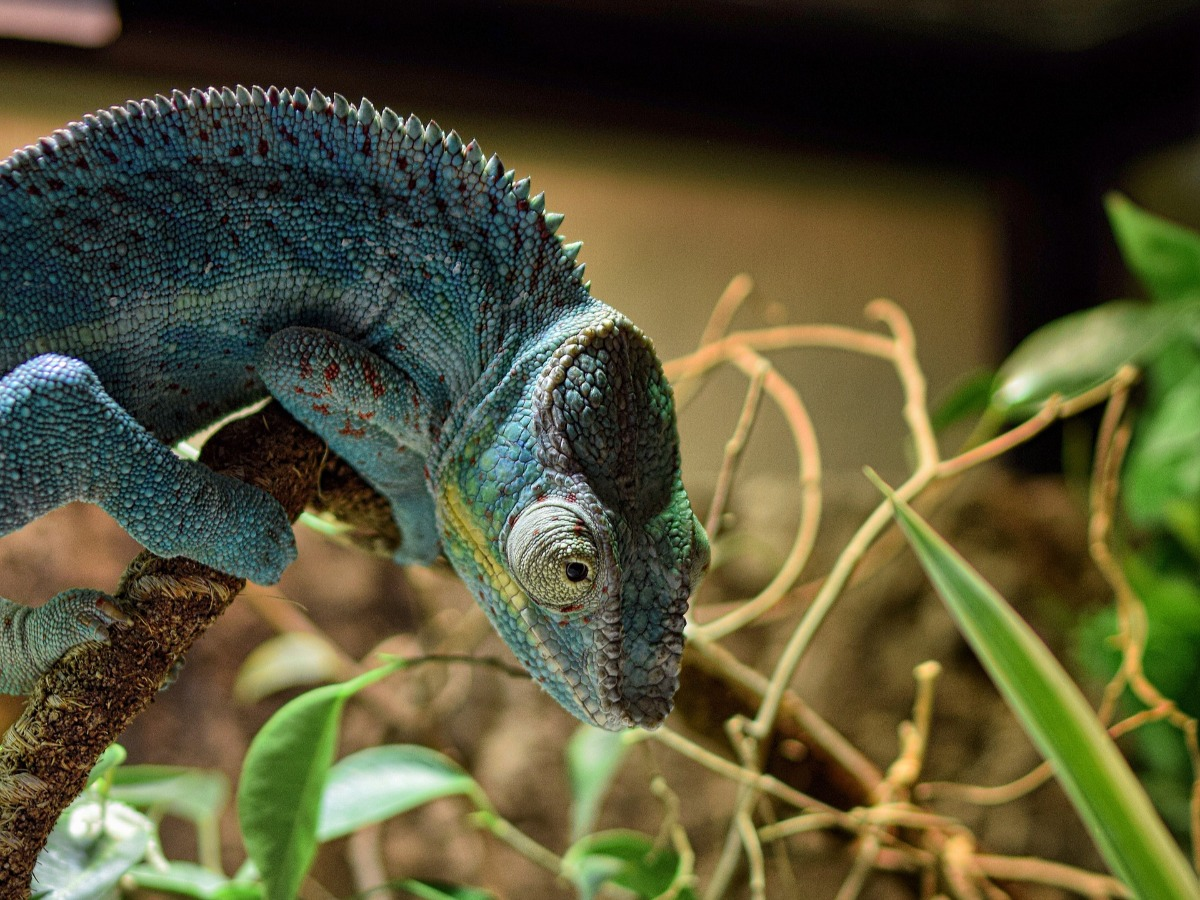 Reptile sur une branche