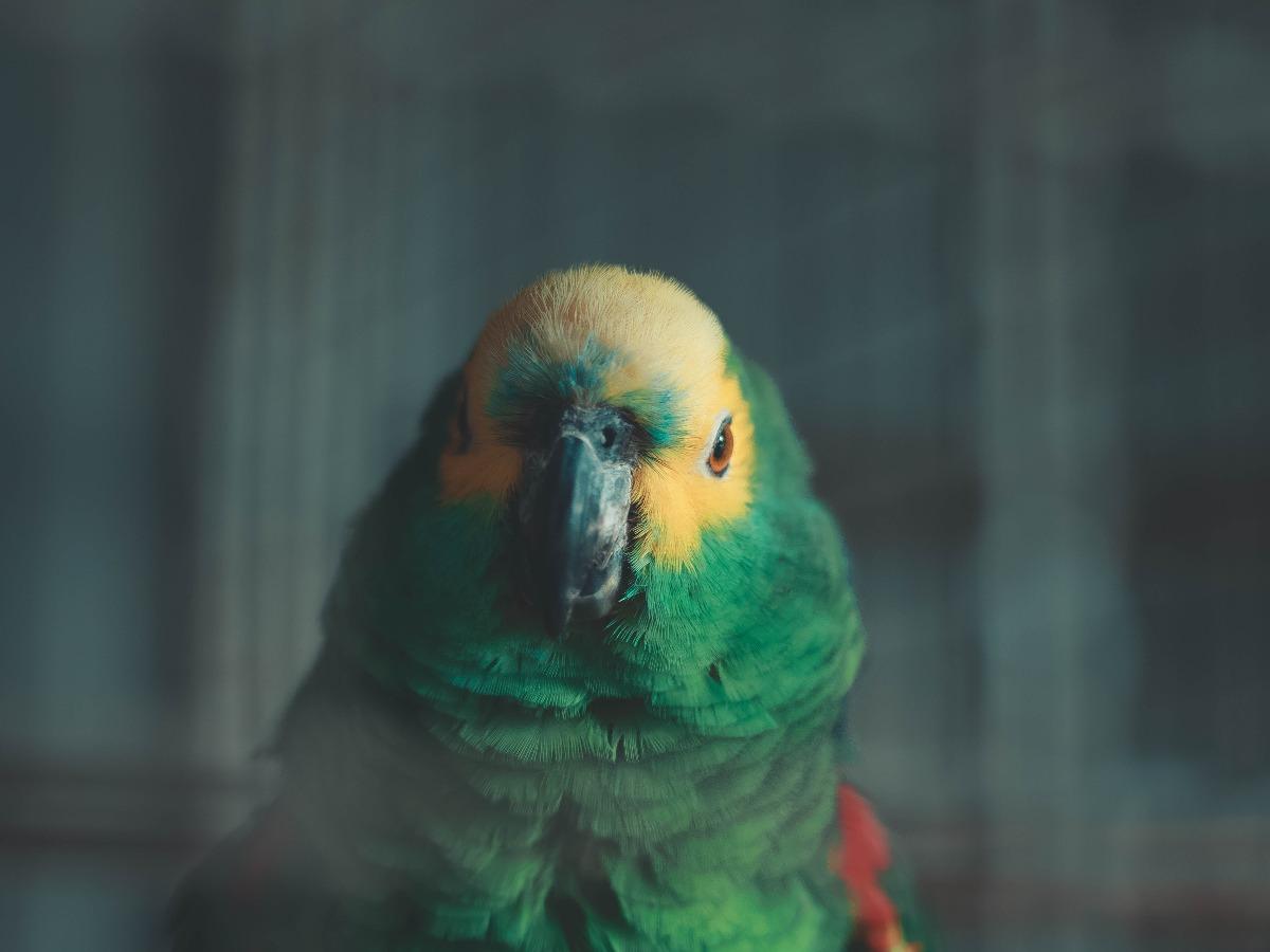 Perroquet vert et jaune