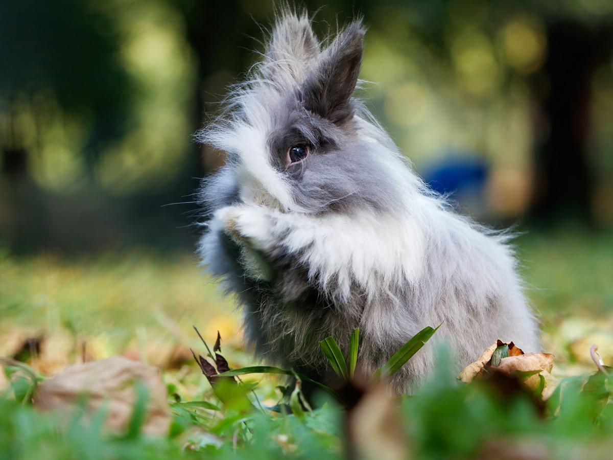 Lapin dans un jardin