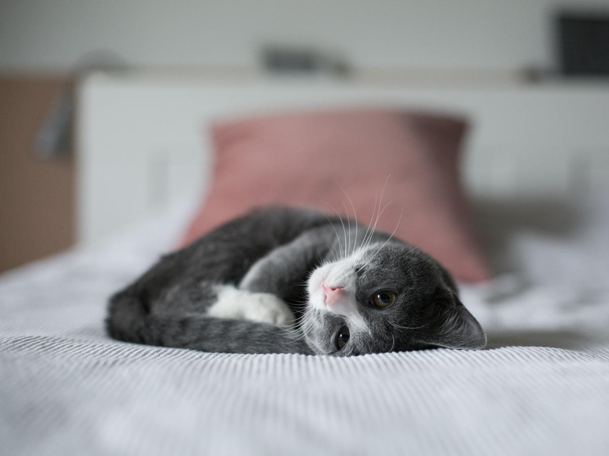 Chat mignon sur le dos