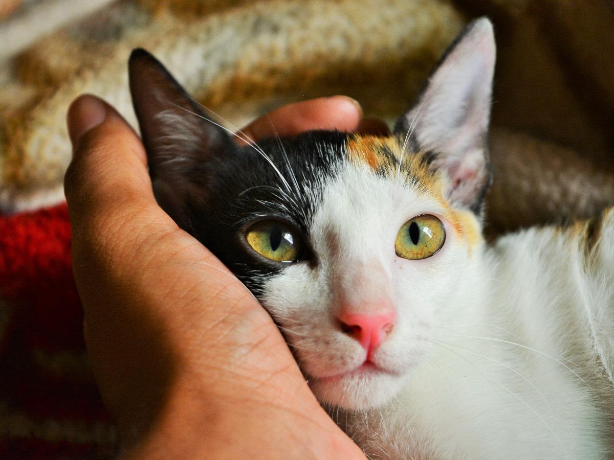 Chat avec de beaux yeux