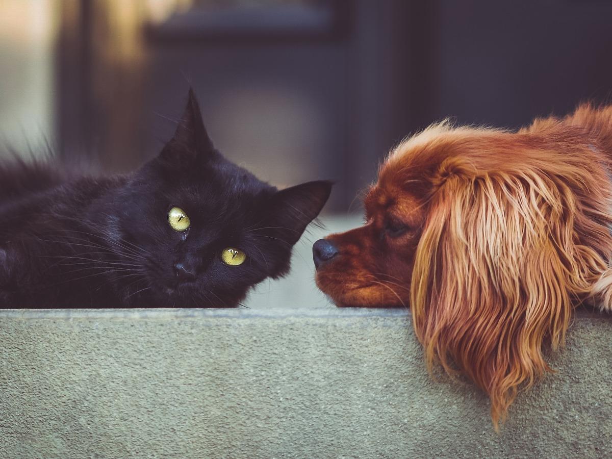 Un chien et un chat face à face