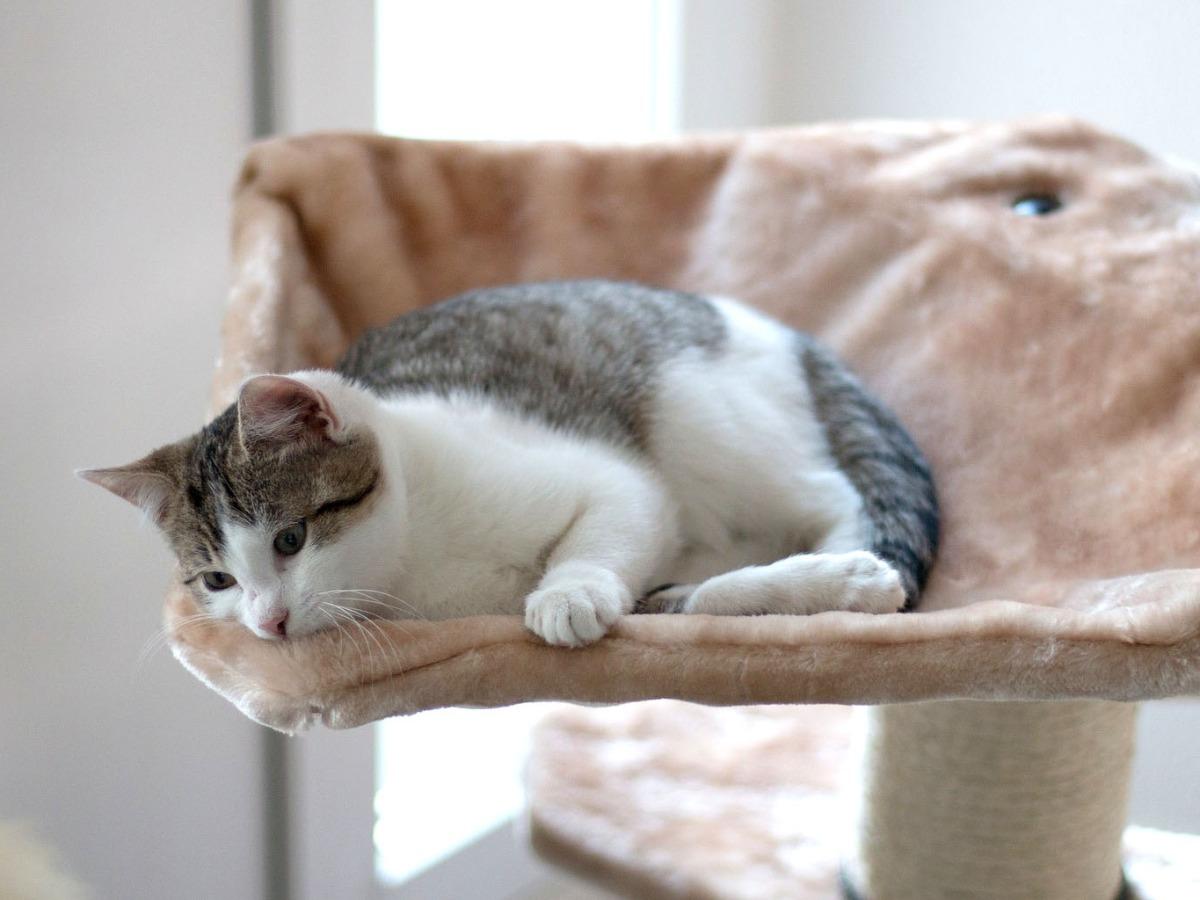Chat allongé patraque
