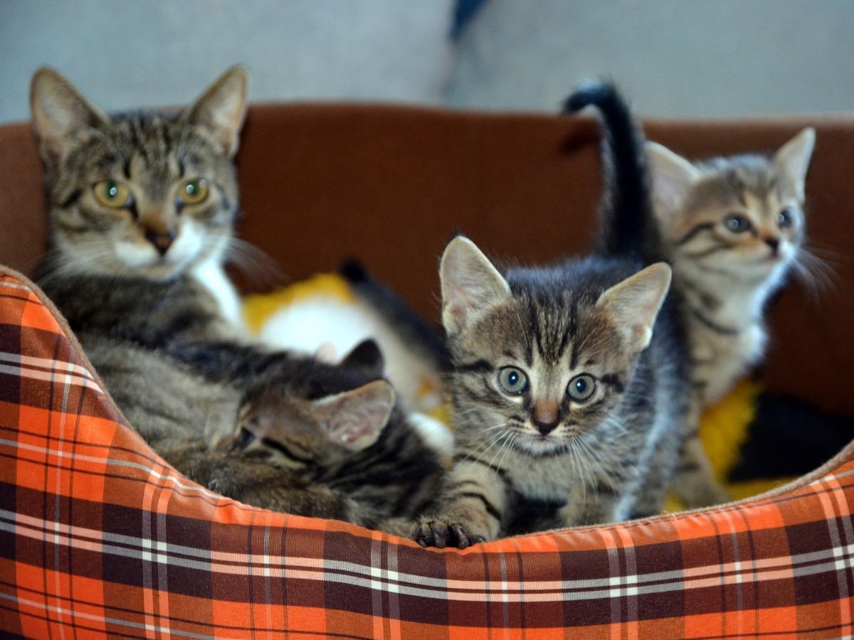 Quatre chats dans un panier
