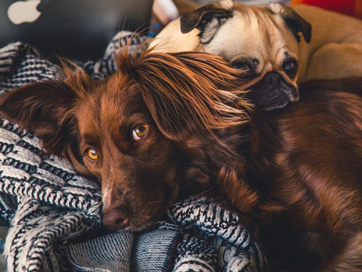 Deux chiens mignons côte à côte