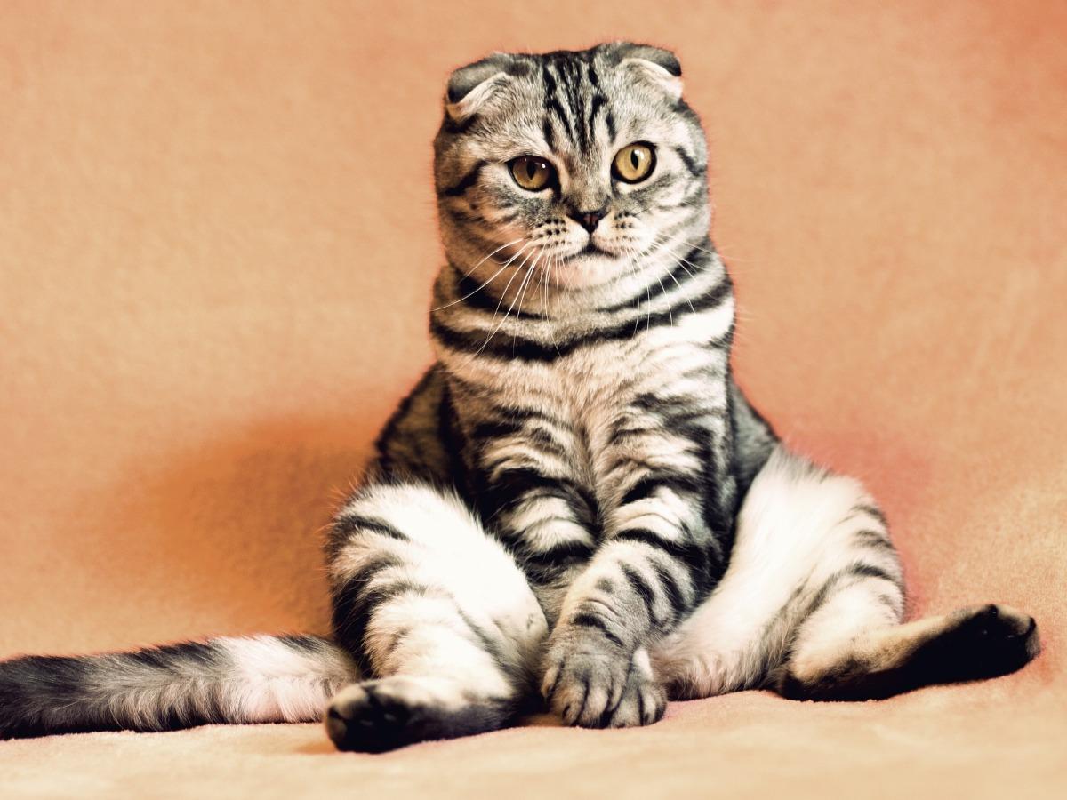 Chat assis d'une drôle de façon
