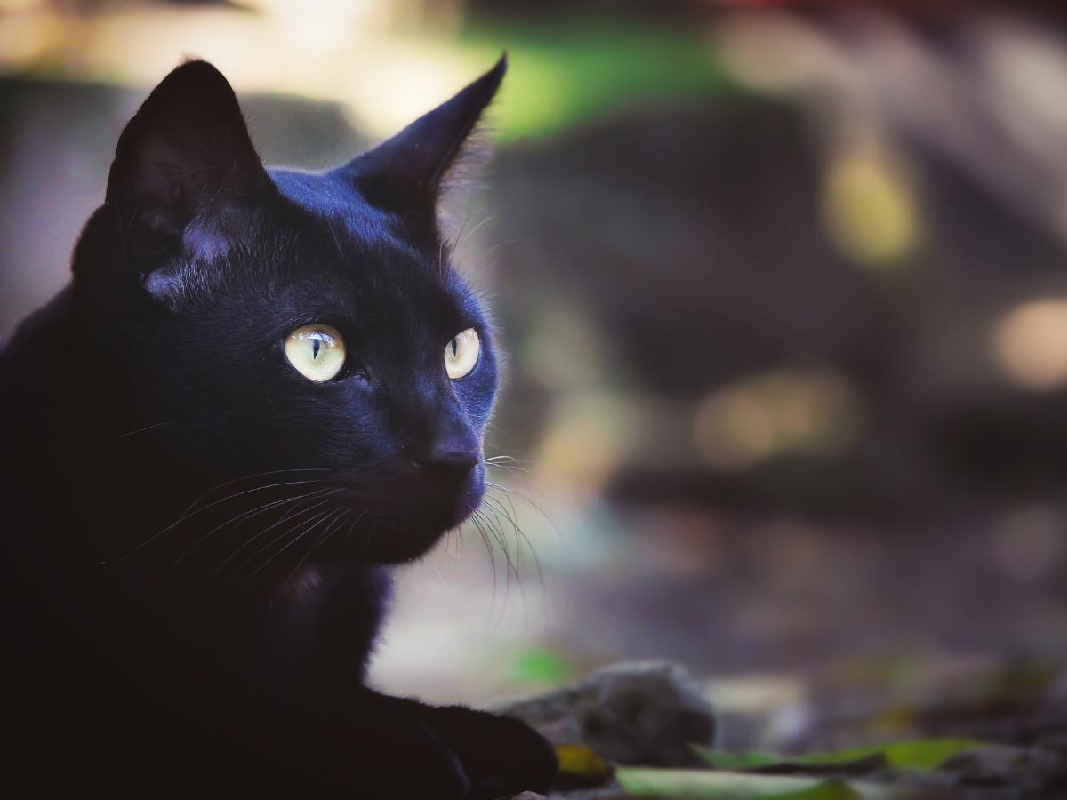 Chat noir avec des yeux jaunes