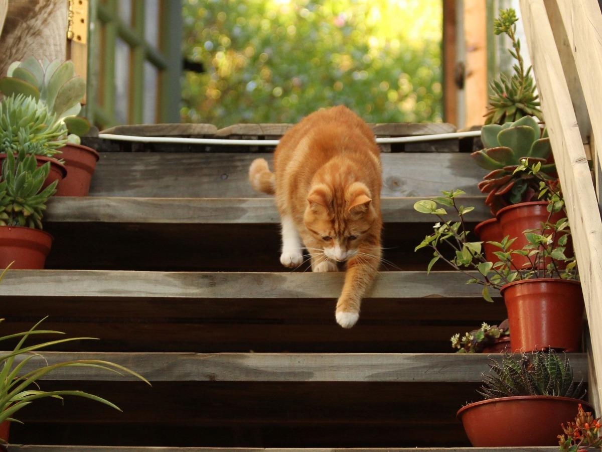 Chat libre dans un jardin