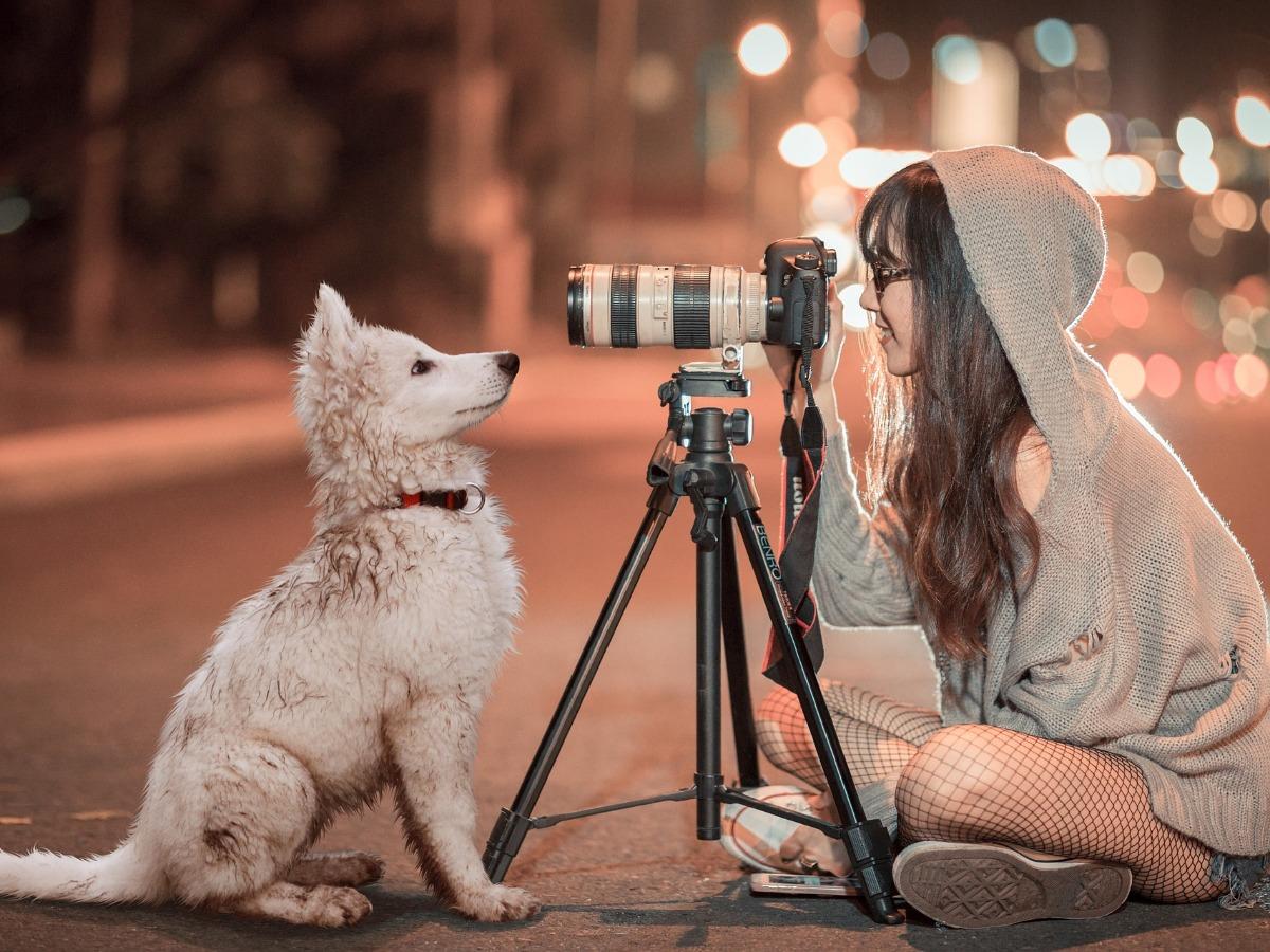 Chien prenant la pose devant une photographe