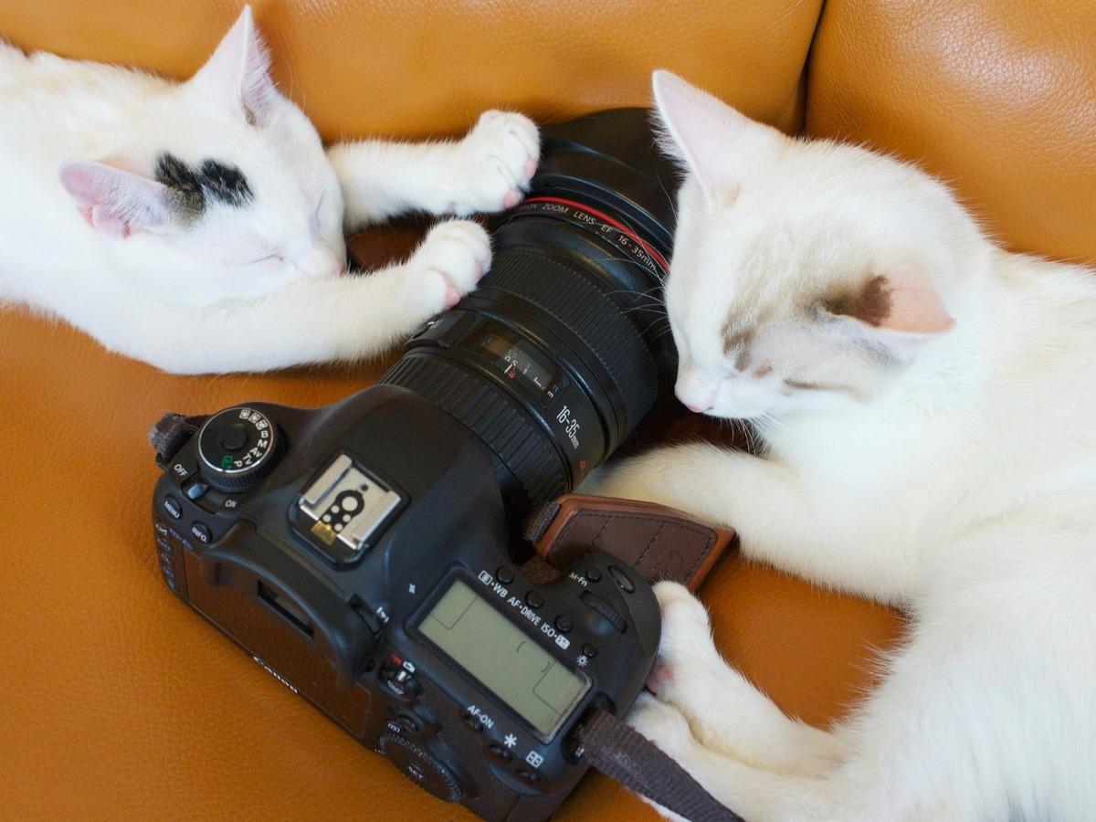Deux chats autour d'un appareil photo