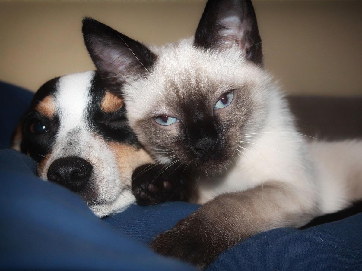 Chien et chat couchés ensemble