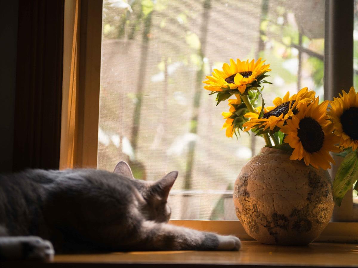 Chat dormant prêt d'un vase